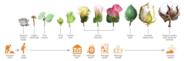 Cotton Production Process