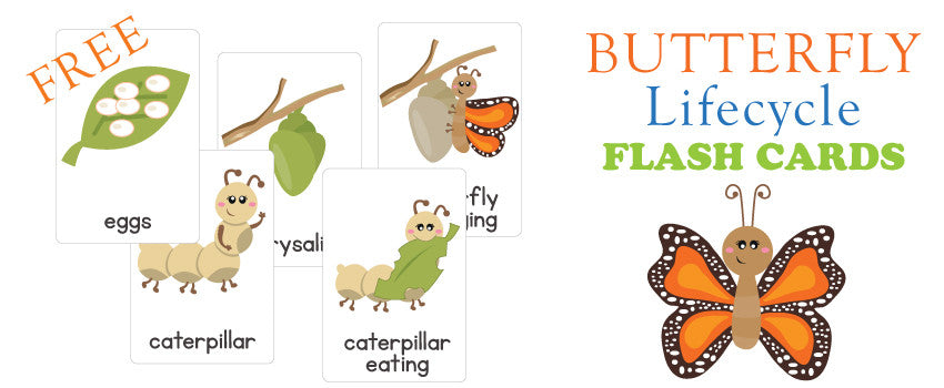 Freebie Friday – Life Cycle of a Butterfly Flash Cards