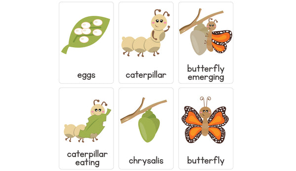 Freebie Friday – Life Cycle of a Butterfly Flash Cards – Busy Little Bugs