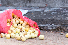 Collected Marula Fruits