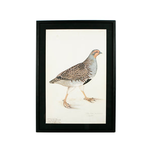 framed bird print