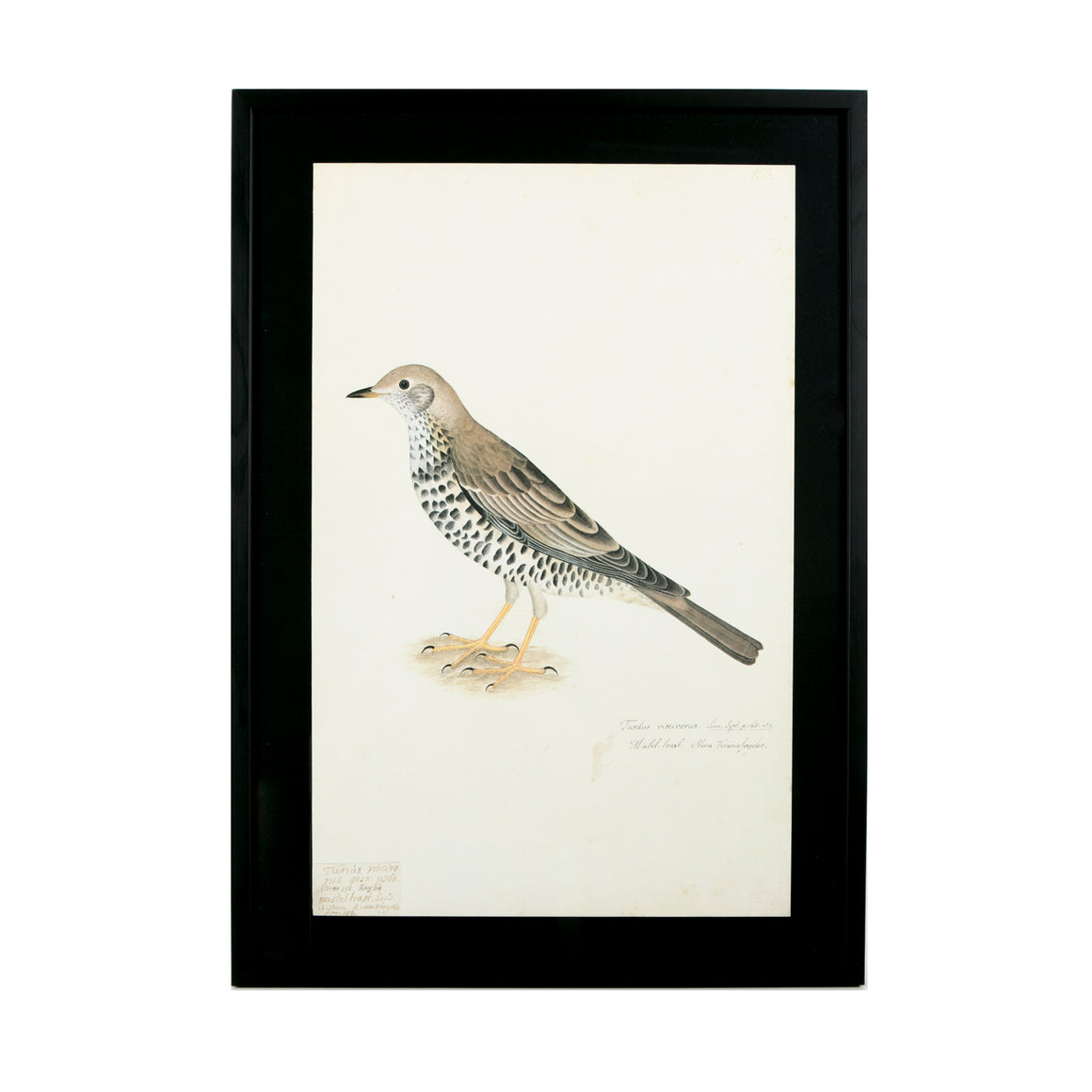 framed print of bird