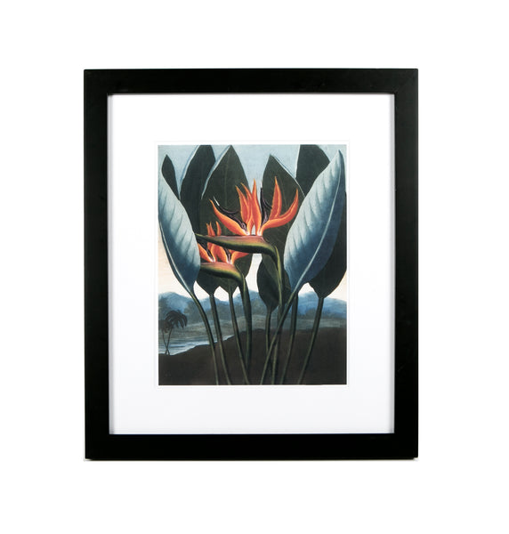 Framed and mounted floral print