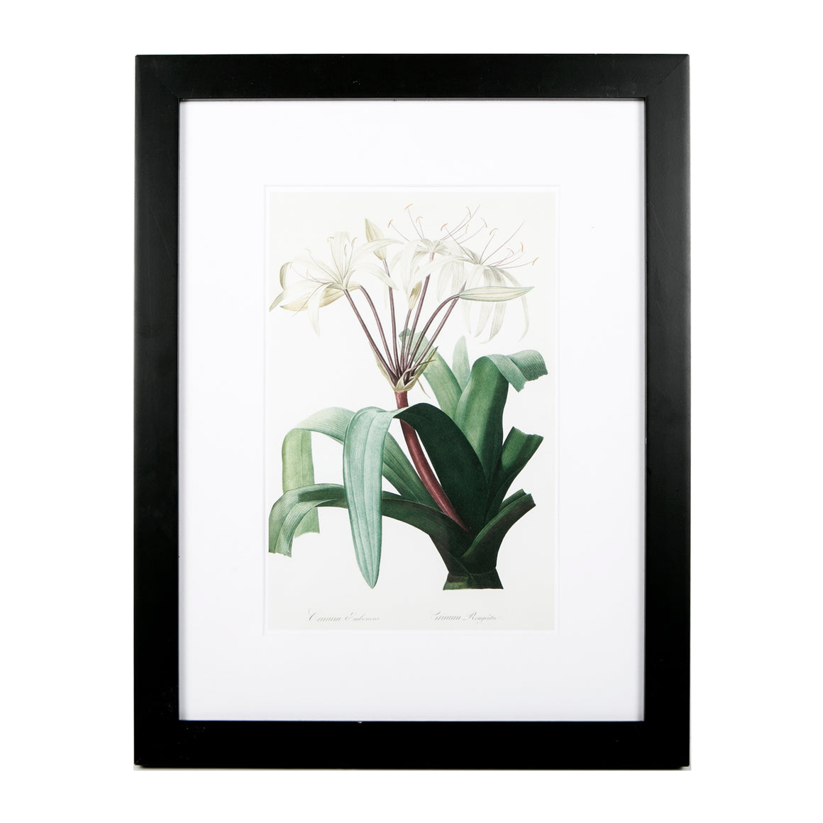 Framed and mounted white floral print