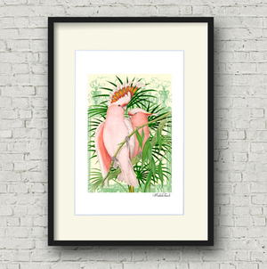 Framed pink cockatiel art print