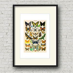 Framed beautiful butterflies art print