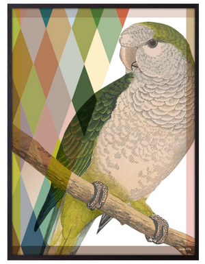Diamond Parrot framed print