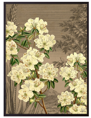 Cream floral framed print