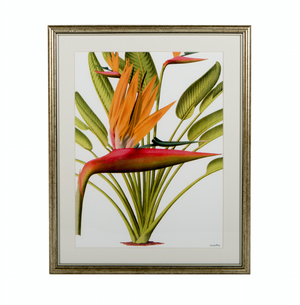 framed heliconia print