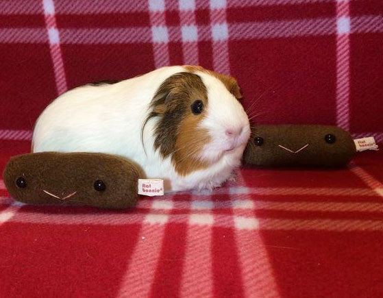 Guinea Pig poo plush - Piggy poop plushie - Plush Stuffed Animal Poop - Flat Bonnie - 3