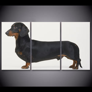 HD printed 3 piece canvas art Dachshund Dog Breed Painting Framed Poster wall pictures for living room Free shipping CU-1621C