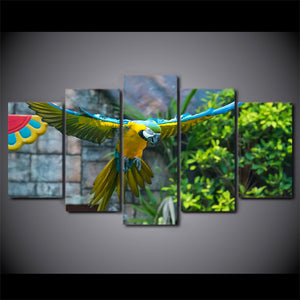 HD Printed 5 Piece Canvas Art Parrot Pet Painting Colorful Feather Bird Wall Pictures for Living Room Free Shipping CU-1753B