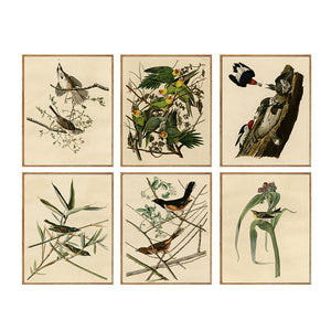 DPARTISAN Canvas Art Print Painting Poster for wall painting art pictures decor Plate wild john james audubon No Frame 25-49