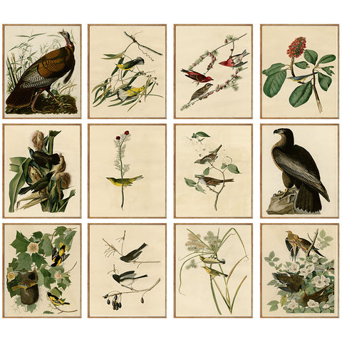 DPARTISAN Canvas Art Print Painting Poster for wall painting art pictures home decor Plate wild john james audubon No Frame Arts