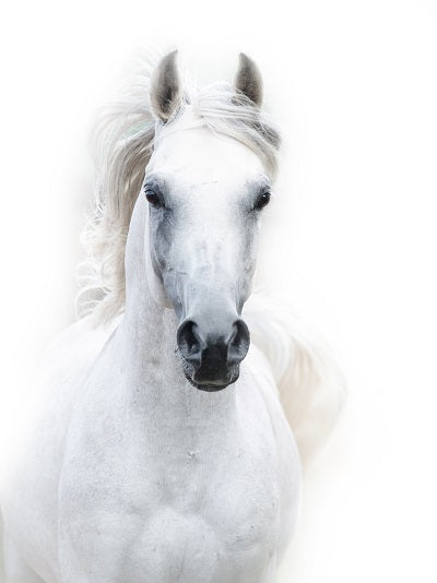 New white horse canvas painting animal poster and print nordic wall ar elleseal