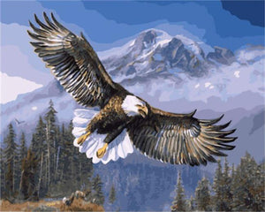 DRAWJOY Framed Picture Eagle Painting & Calligraphy  DIY Painting By Numbers On Canvas Coloring By Numbers