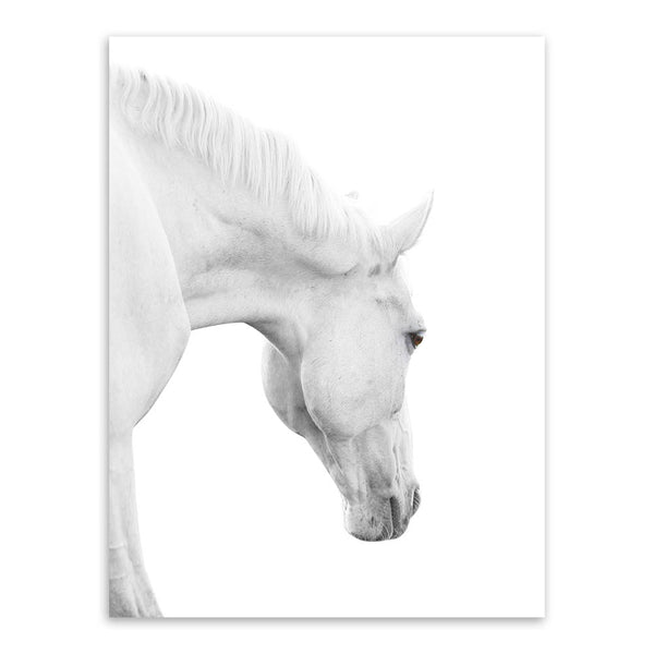 Wild Animals White Horse Head Large Canvas Art Print Poster Wall Picture Living Room Modern Nordic Home Decor Paintings No Frame