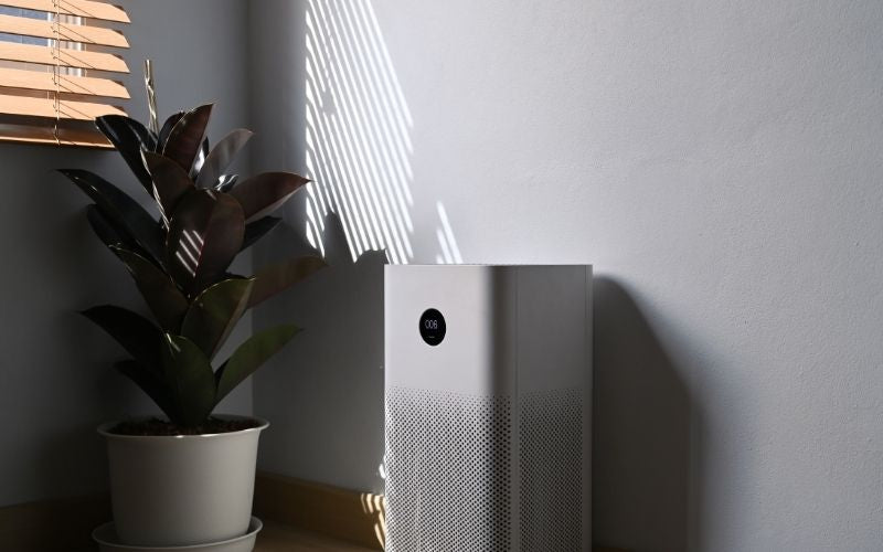 Air Purifier and Houseplant in Modern Home