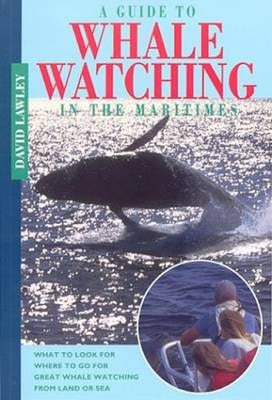 Guide to Whale Watching