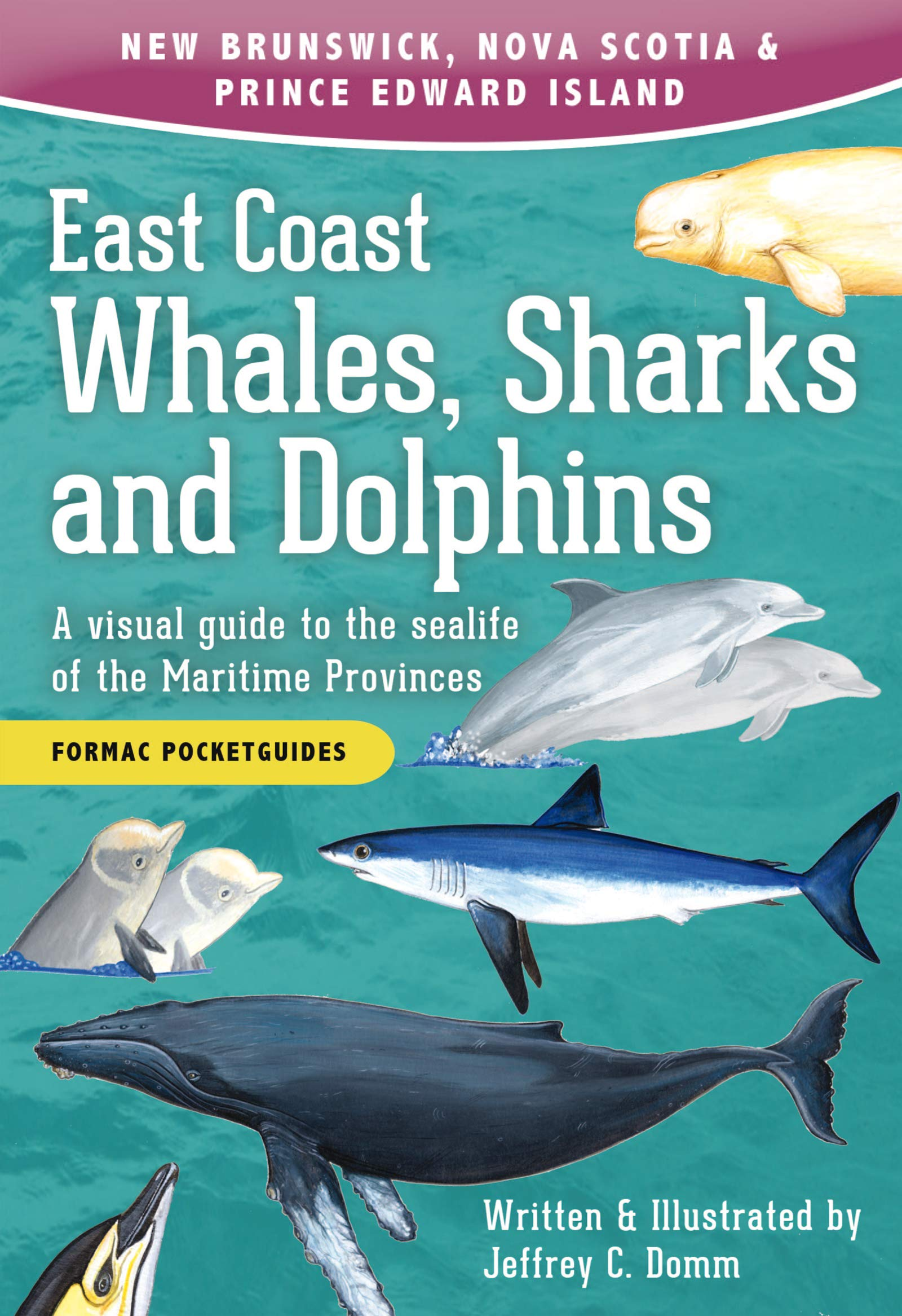 East Coast Whales, Sharks and Dolphins: A visual guide 2e