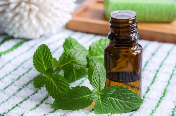 Peppermint As An Effective Healing Oil