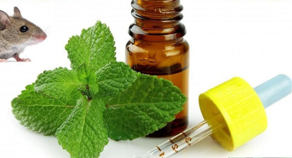 Peppermint Oil As A Deterrent For Mice