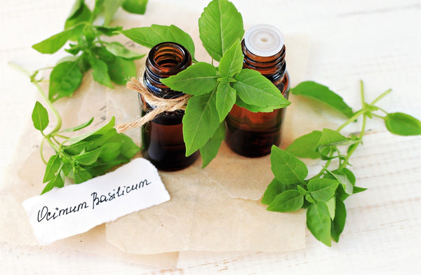 Basil Essential Oil for Colds and Flu Relief