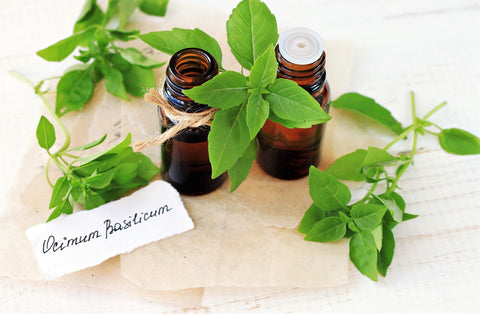 Basil Essential Oil for Restless Leg Syndrome