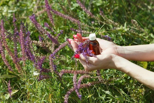 Surrounded by Clary Sage, two hands with red nail polish cup a bottle an amber-colored bottle and Clary Sage leaves