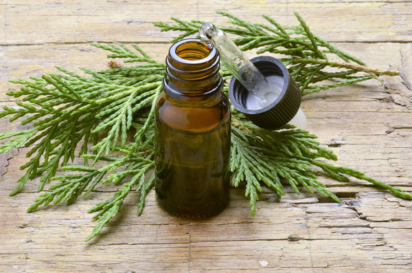 Cypress Essential Oil for Colds and Flu Relief