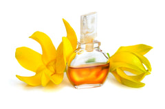 Ylang Ylang Essential Oil for Hair Growth