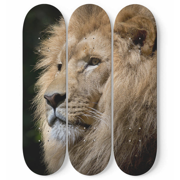 Lion 3-Piece Skateboard Deck Wall Art Maple Wood Hanged Room Decoration Gift For Home