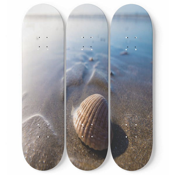 Seashell Shore Skateboard Wall Art Set Of 3 | 3 Piece Wall Art Prints | Tropical Photo On Wood | Wood Wall Panel | Interior Home Decoration | Modern Room Decor