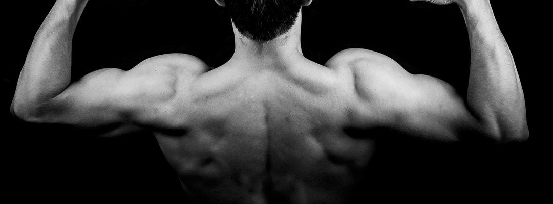 collagen for muscle to bone connection