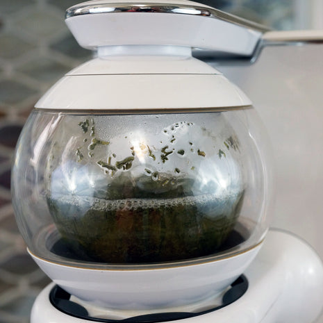 Loose leaf sencha being made in the Teforia infuser