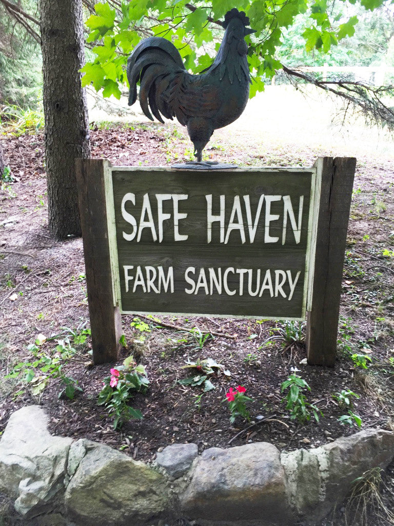 My Visit to Safe Haven Farm Sanctuary