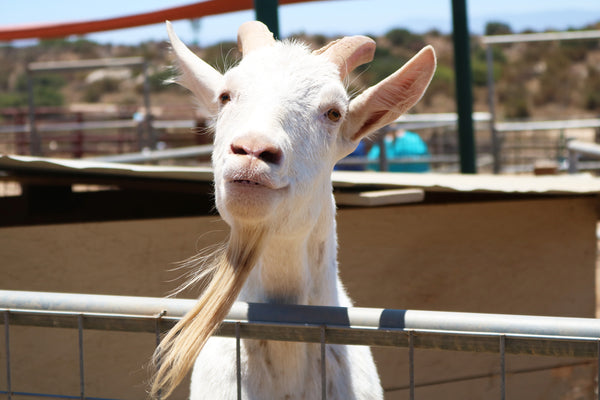 Sale Ranch Sanctuary Temecula California Vegan