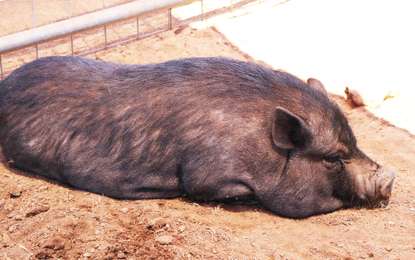 Sale Ranch Sanctuary Temecula CA Vegan