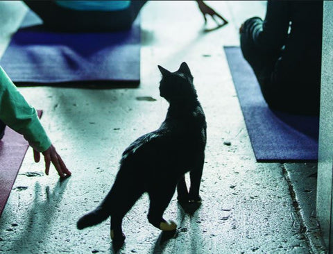 Sanctuary Brewing Yoga with Cats