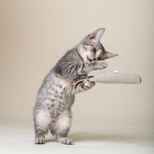 All natural cat toys for your feline family members