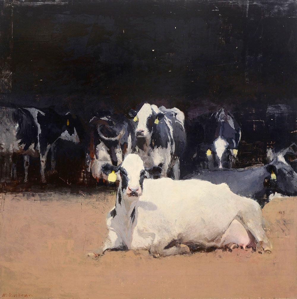 Large white milk cow with black markings and a yellow tag in her year sits in the barn yard with other black and white cows behind her.