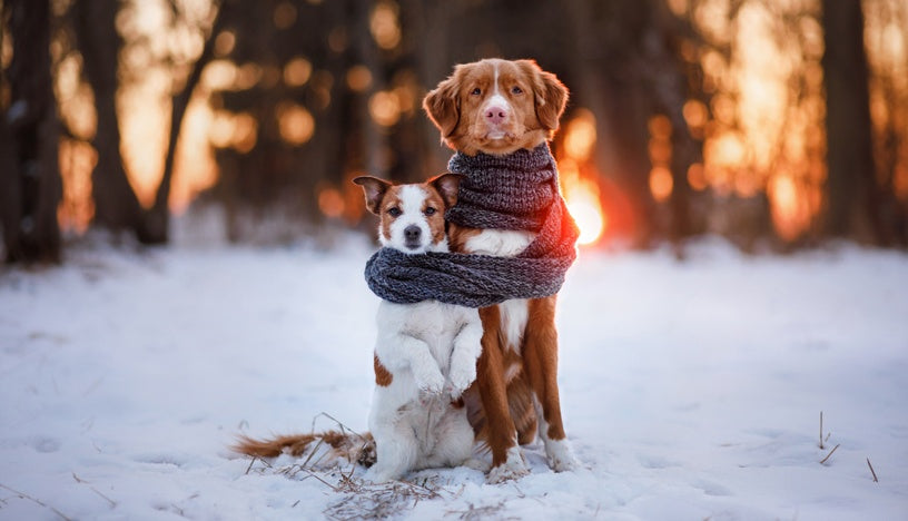 Canines Need Winter Protection Too!
