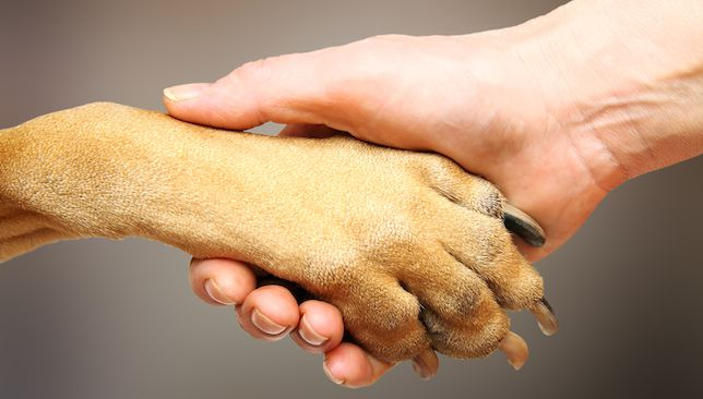 For Canine Paws and Human Paws