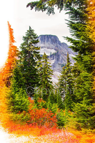 Fall In The Cascades - MtBakerTradingCompany.com