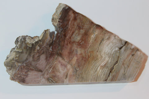 Petrified Wood Slab - MtBakerTradingCompany.com