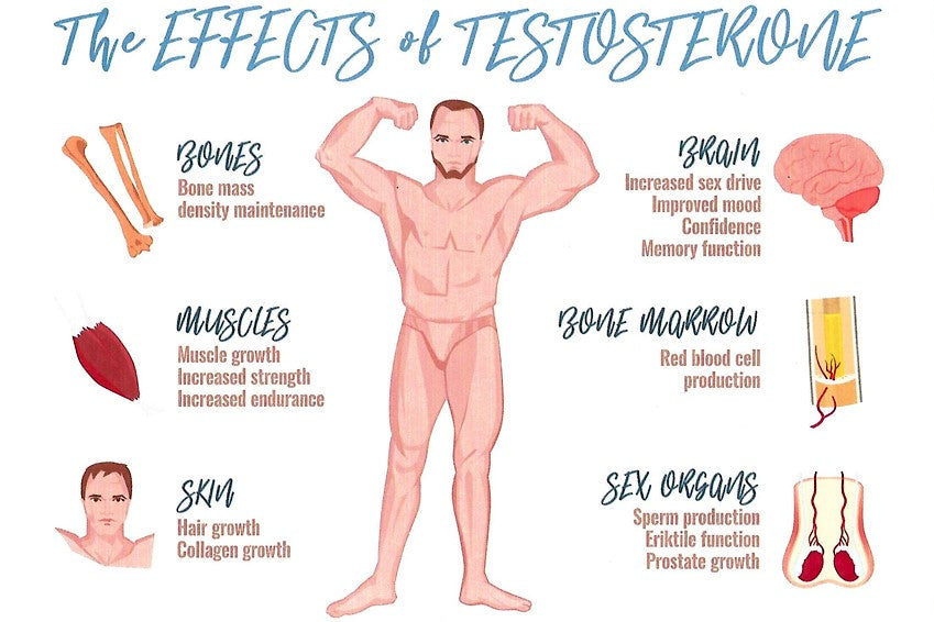 Signs Your Testosterone Is Not Optimized