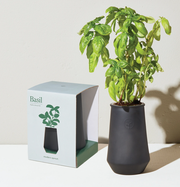 Tapered Tumbler Grow Kit - Basil