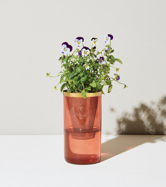 Tumbler Planter - Pansy & Zinnia (Certified Non-GMO Seeds)
