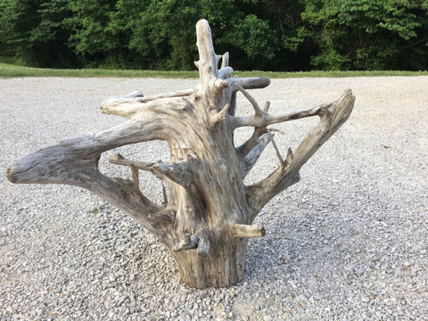 driftwood stump with roots