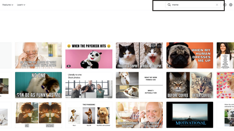 Canva Search For MEMES
